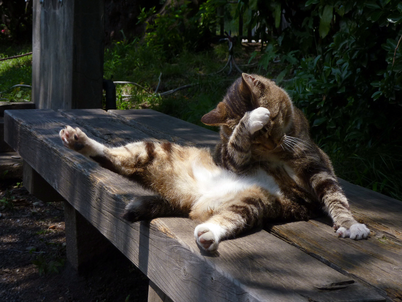 公園のベンチで毛繕いする猫