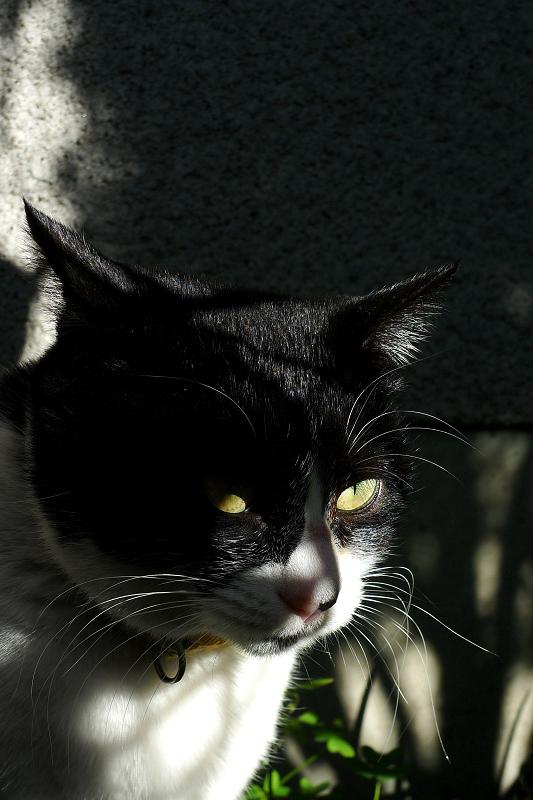 顔に影が出来たネコ