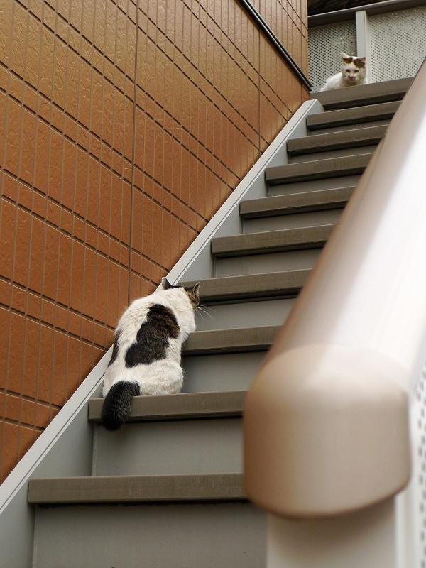 階段のネコ2匹