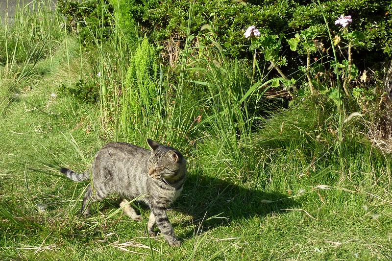 草むらで日射しを受けて眩しそうな猫