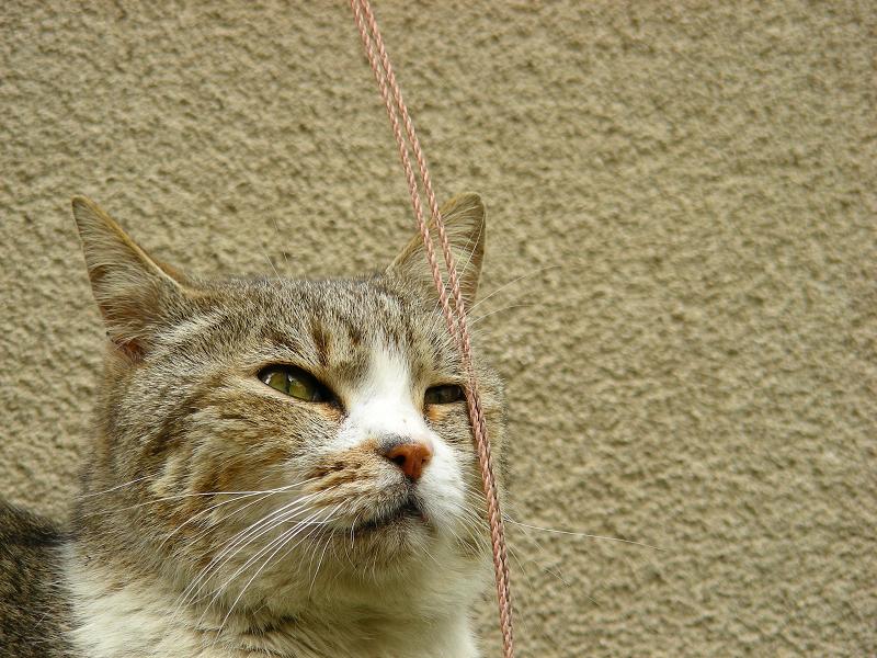 天才的天然的な猫の面白い行動