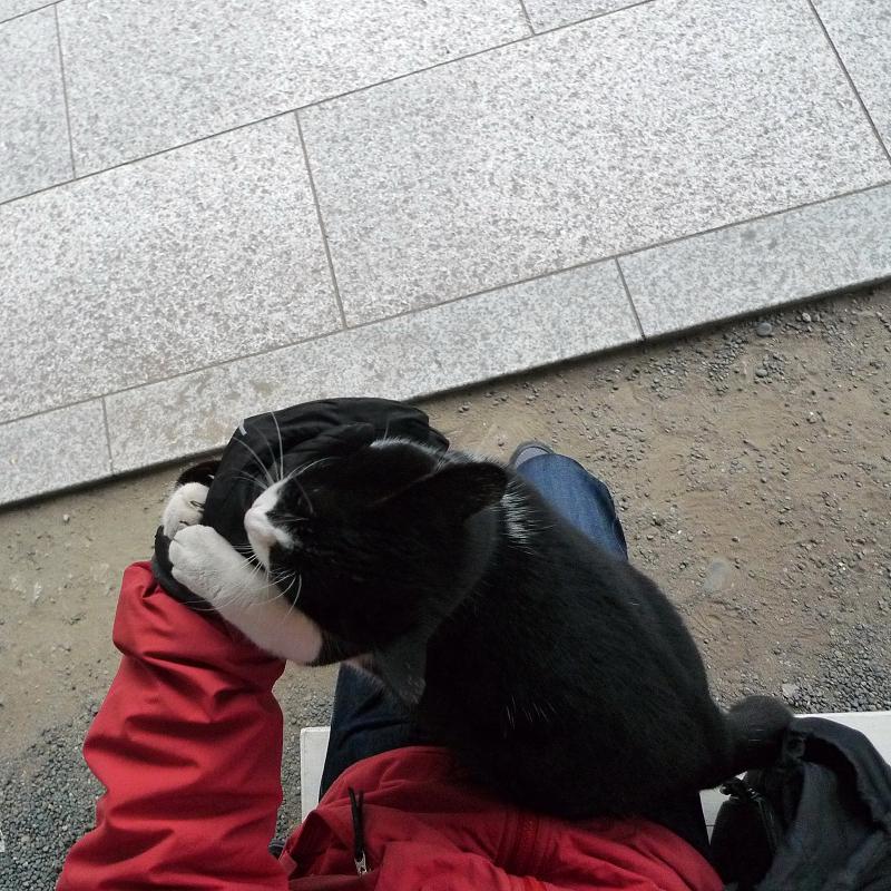 膝の上で暴れるネコ