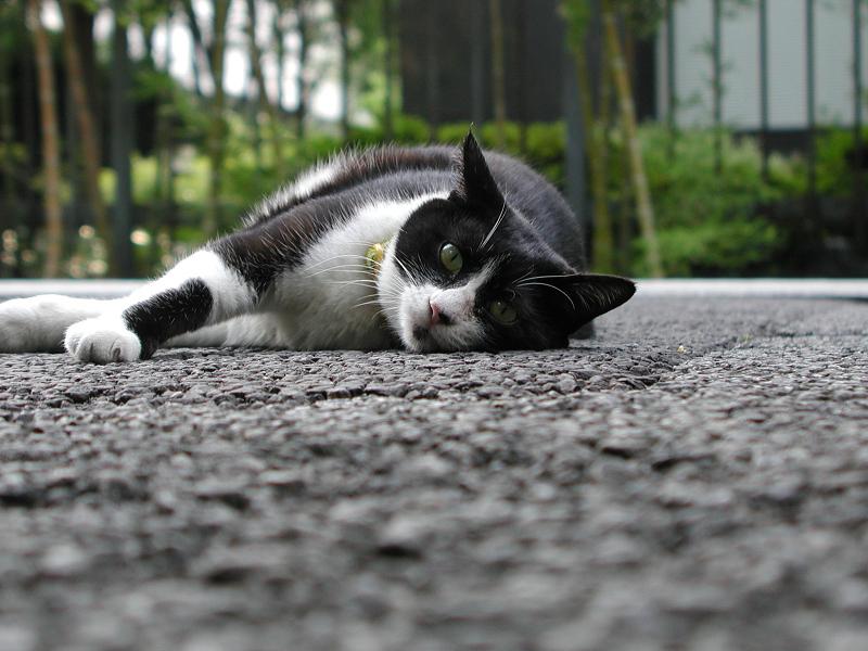 横になって目を開いて私を見る猫