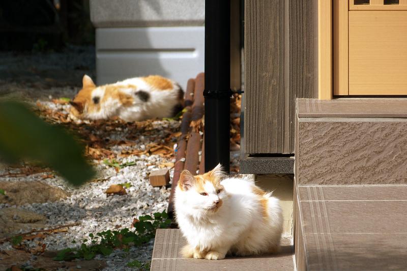 日射しの中のネコ2匹
