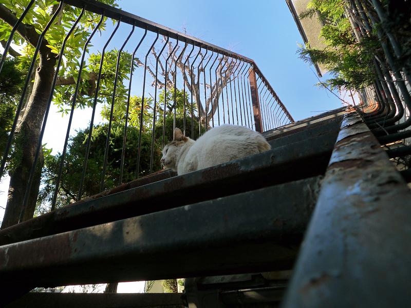 階段の途中に座ってるネコ