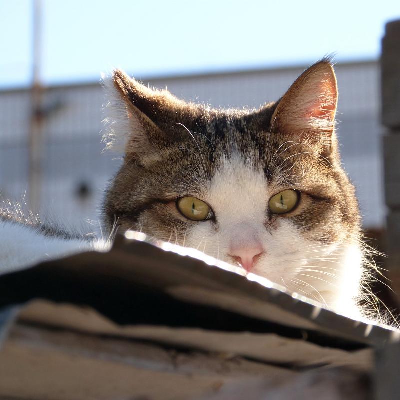 ビックリ顔でレンズを凝視するネコ