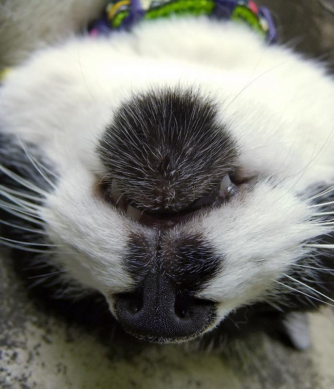 仰向けで寝てる猫の顎