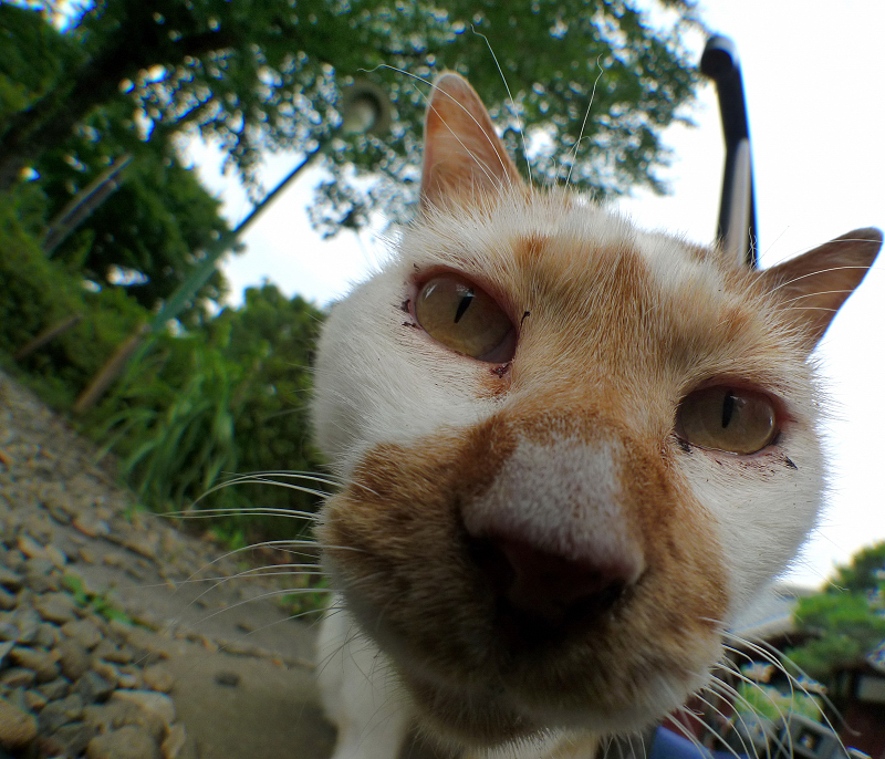 広角レンズを上から覗き込む猫