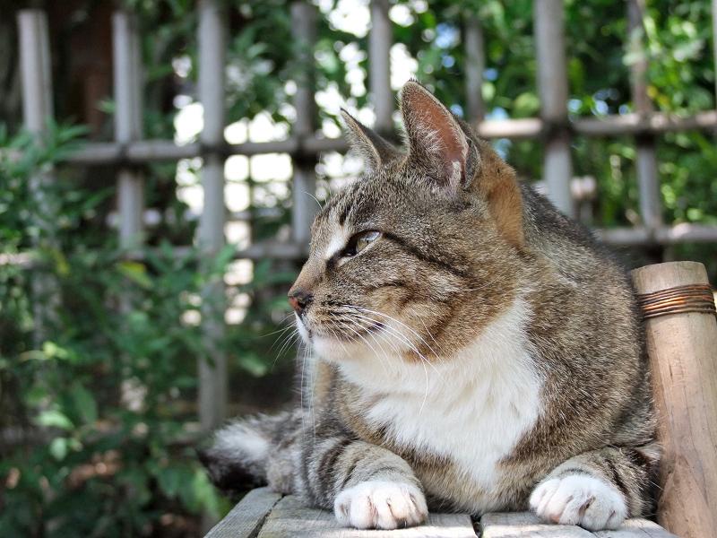 木漏れ日の庭園のベンチで座る猫