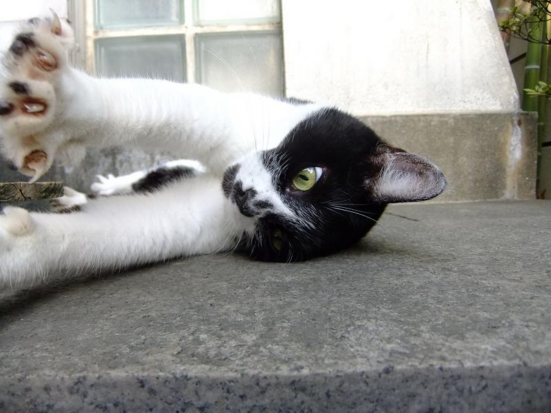 寝起きに伸びをする猫