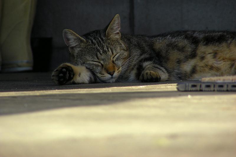 日陰で熟睡してるネコ