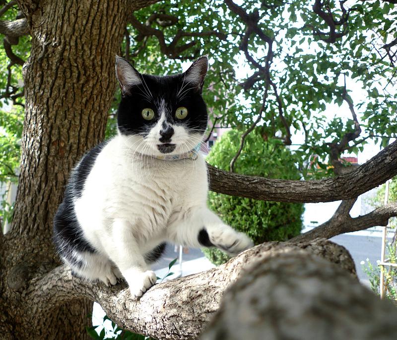 楠の真剣顔のネコ