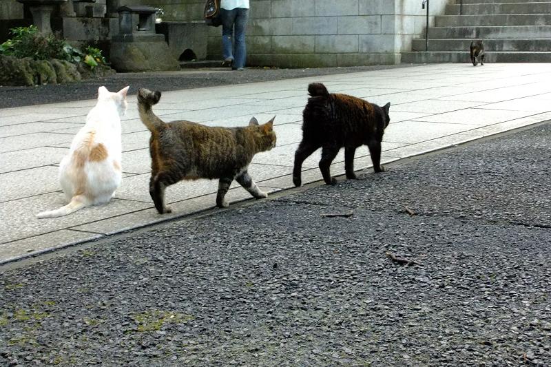 ボランティアさんの後ろをついて歩く猫たち