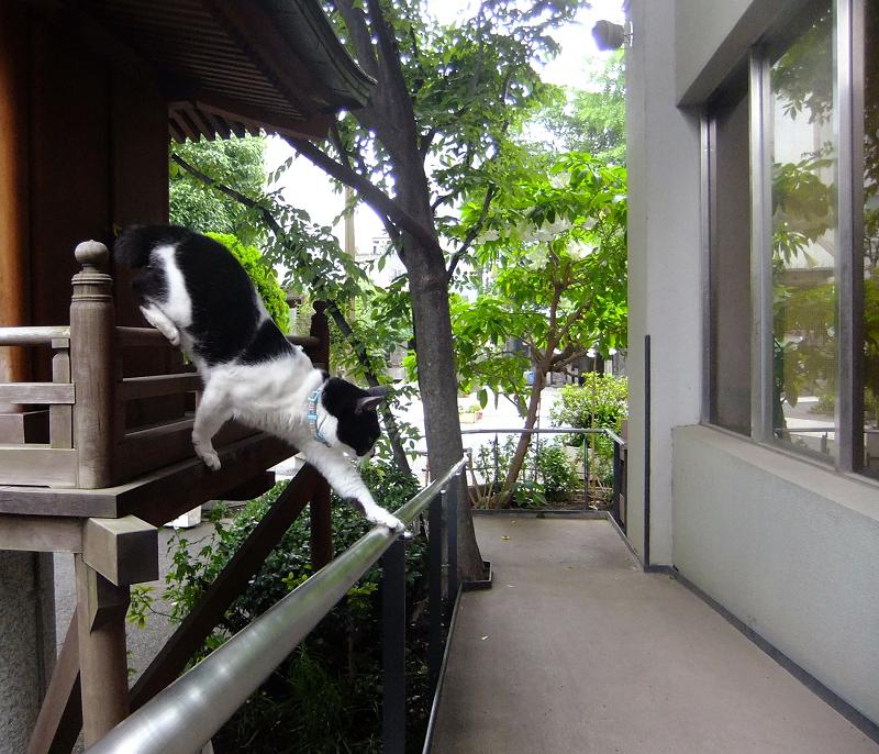お社から手すりを使って降りる猫