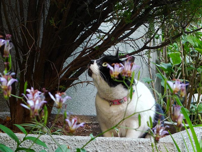 真剣な表情で空を見上げるネコ