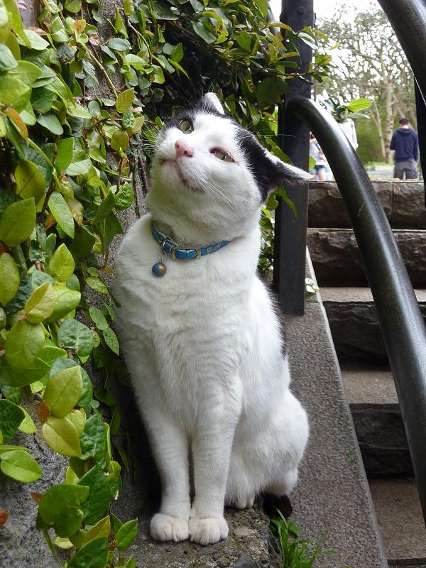 階段の横でちょっこと牙を出す猫