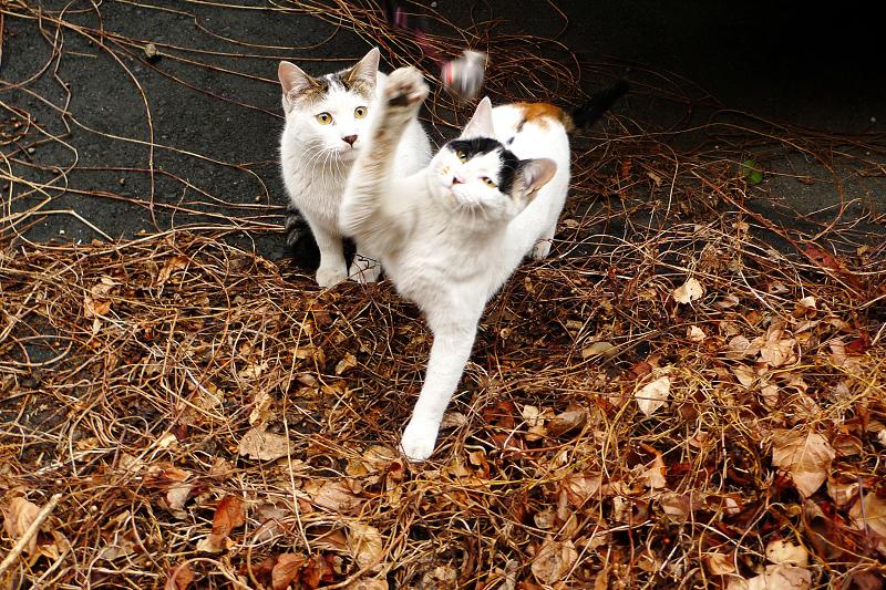 ネズミのオモチャで遊ぶネコ