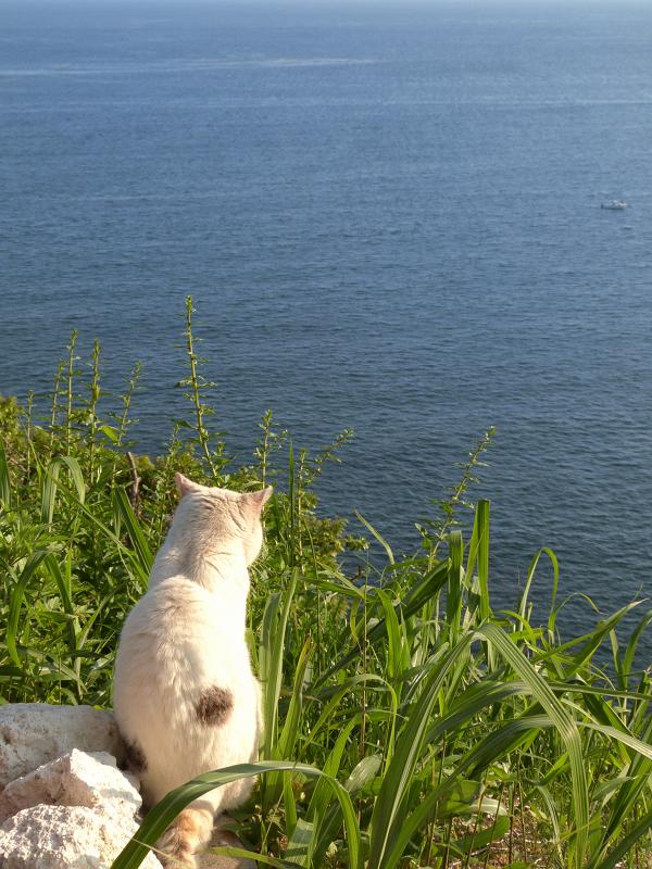 高台から海と船を見ている猫