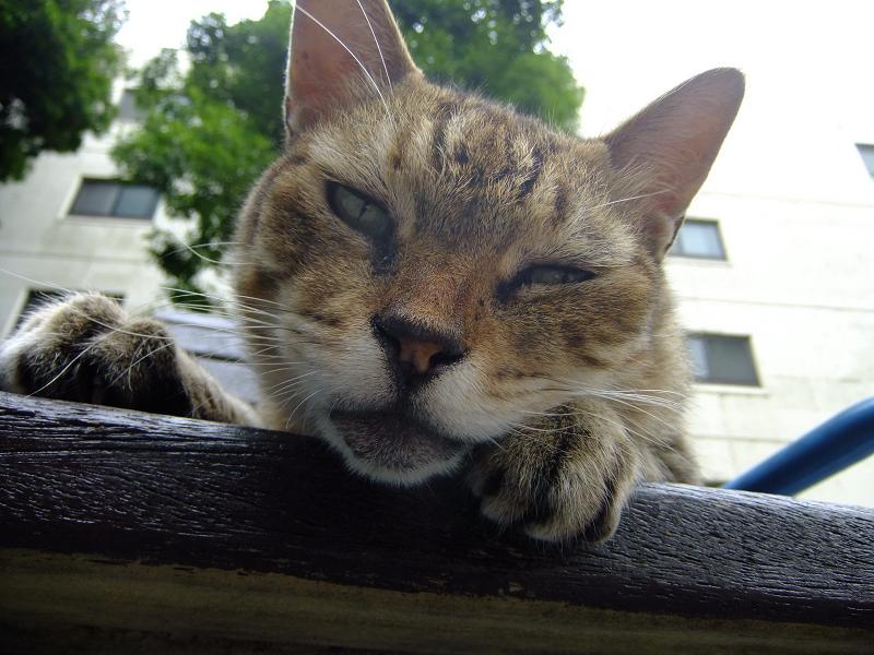 ベンチから見おろす猫