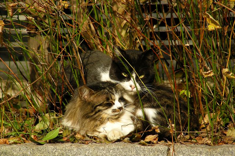 仲良しなネコ2匹