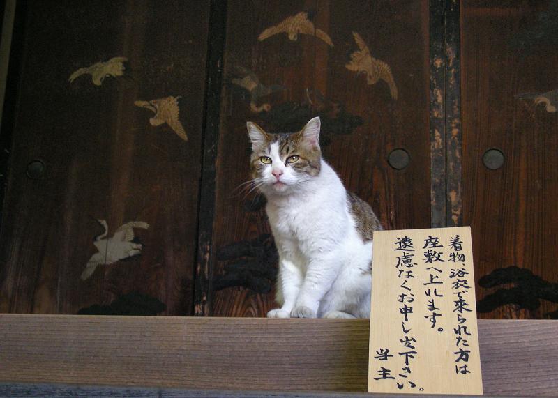 玄関先で来客に挨拶する猫