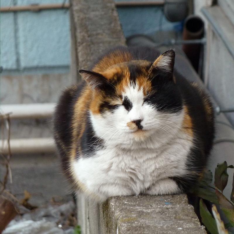ブロックの上で微笑むネコ