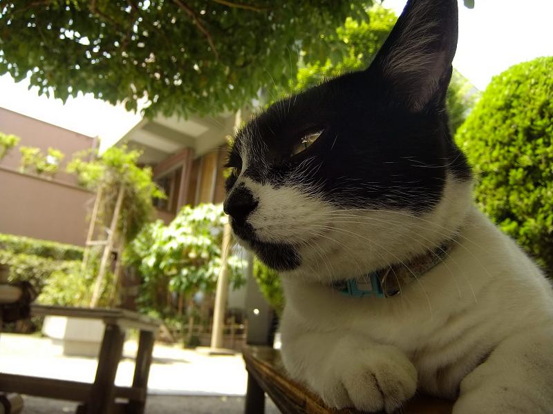 日陰ベンチでまどろむ猫