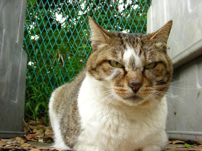 睨み顔の猫をローアングルで