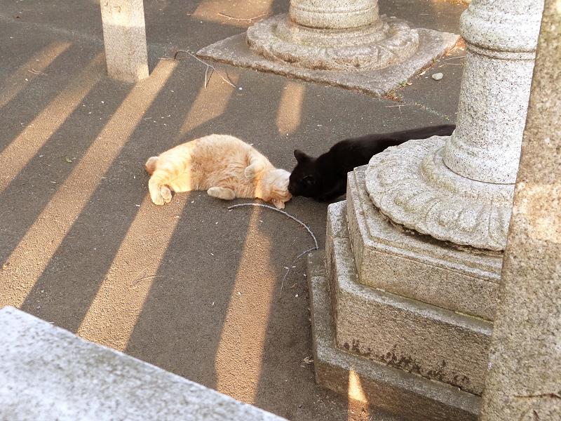 石道路の横でキスをする猫