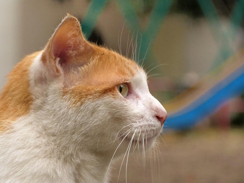 横目で見てる猫の横顔