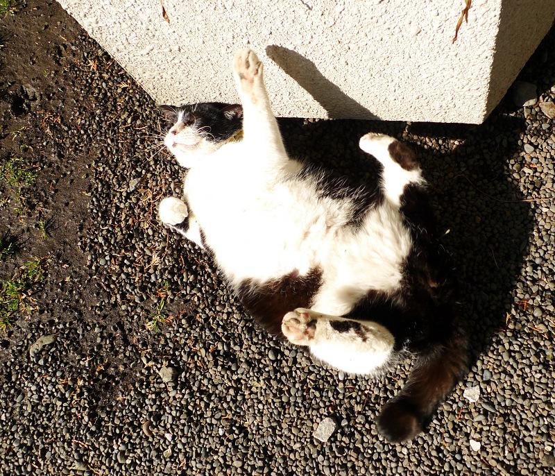 光を浴びて弾けるネコ