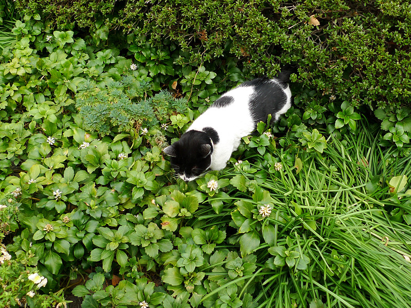 茂みのネコ