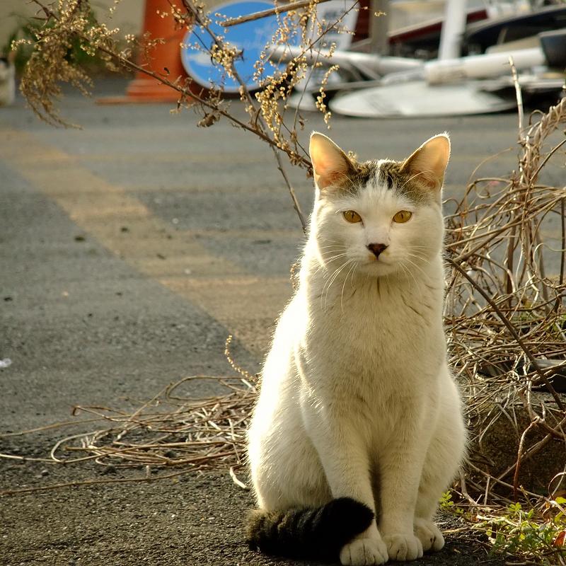 資材置き場に座ってるネコ