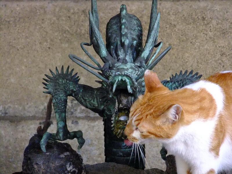 竜の口から流れる水を飲むネコ
