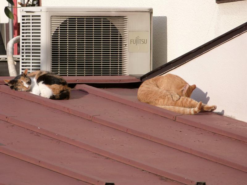屋根の上でノンビリとしてるネコ