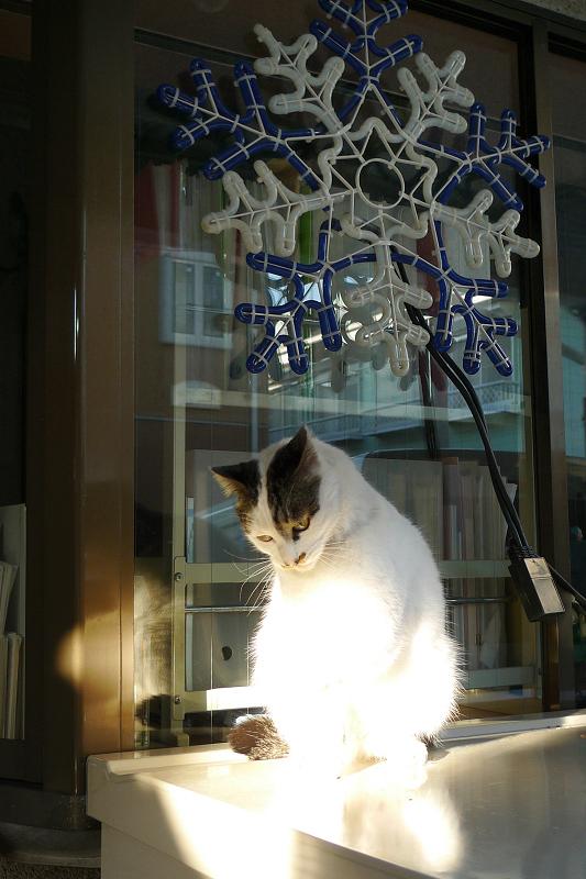 雪の結晶のネオンの前のネコ