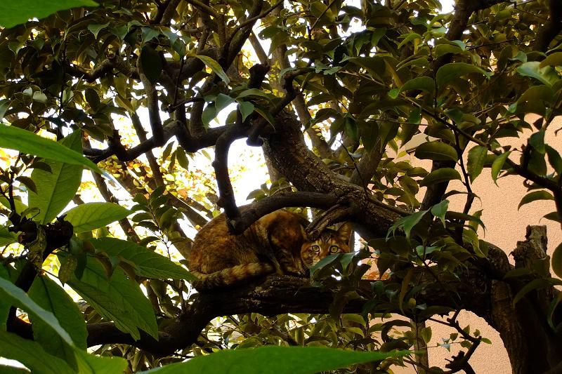 木の上の真剣顔のネコ