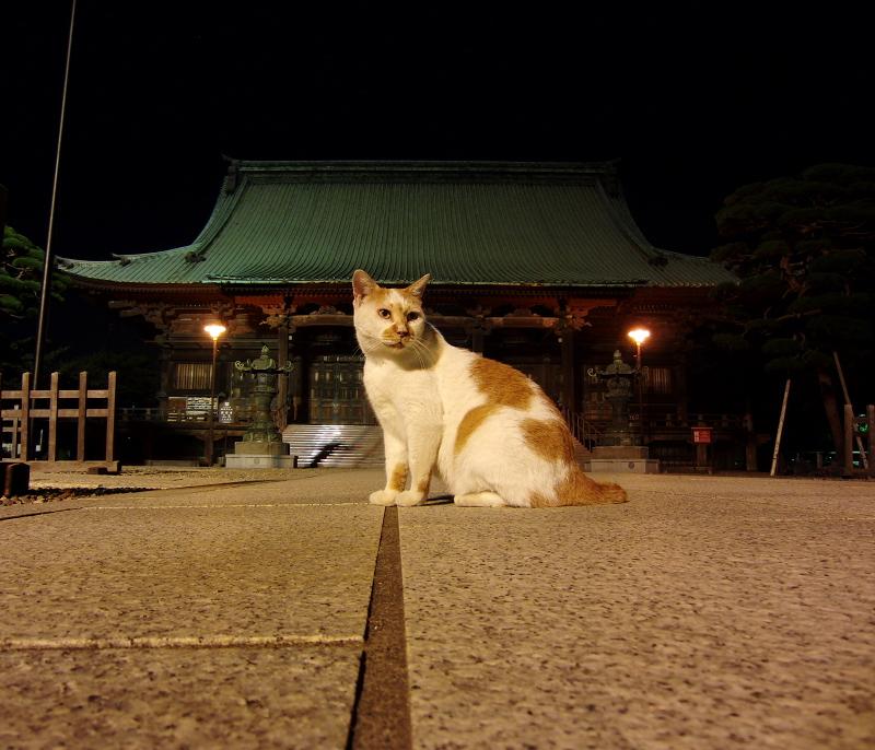 夏の夜にお寺の境内で撮った猫