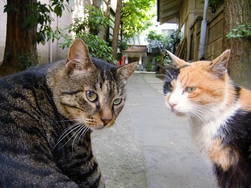 神社の参道で振り向く猫たち