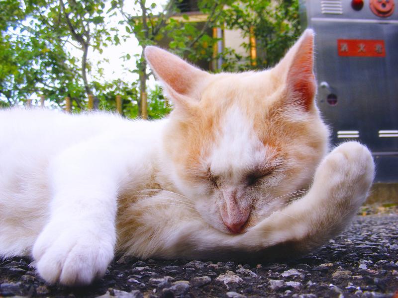 肘の裏を必死で噛んでる白茶猫