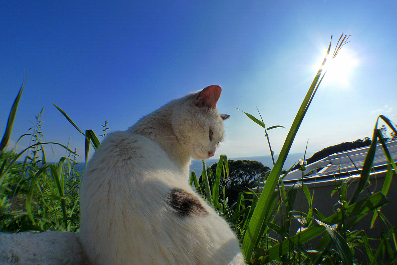 青空と青い海太陽の陽射しと猫