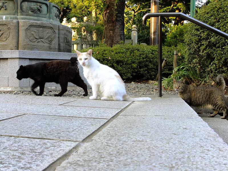 冷たい視線で一瞥する猫たち