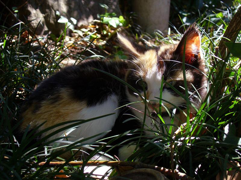 陽差しが差し込む草むらで寝ていた猫