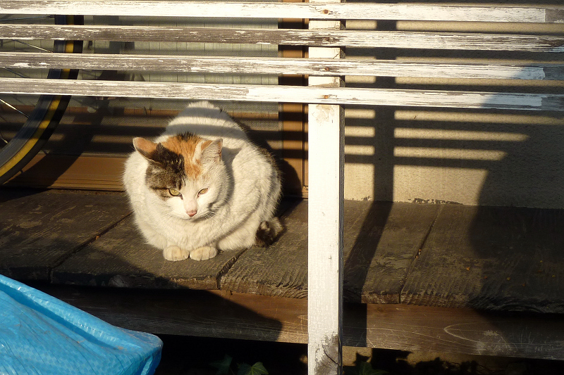 縁側のネコ