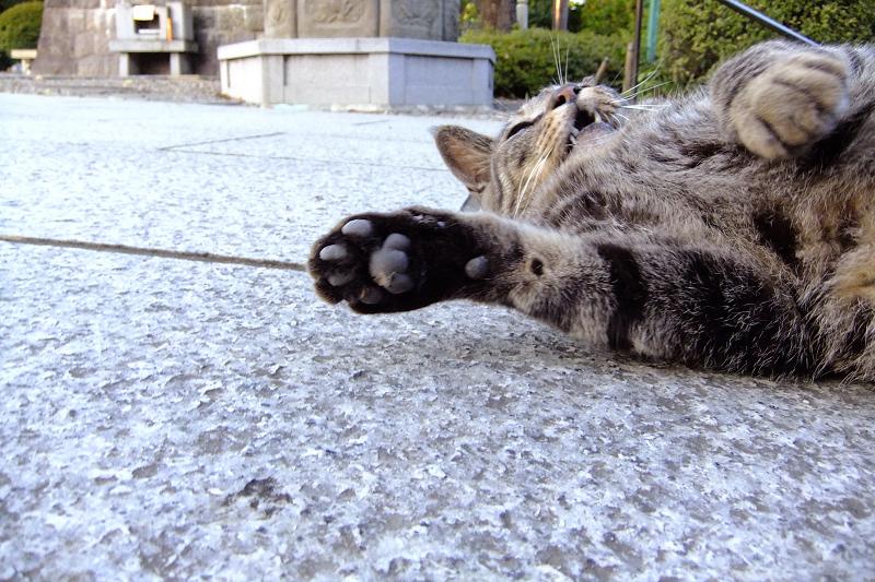 鳴きながら転がる猫