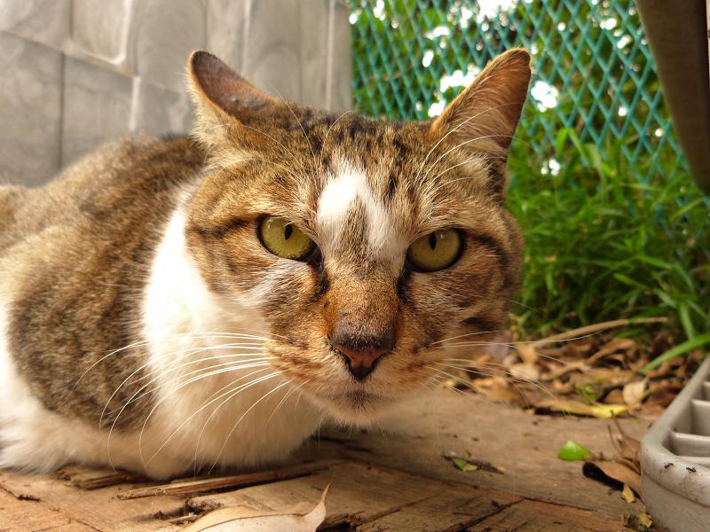 ローアングルで覗き込む猫