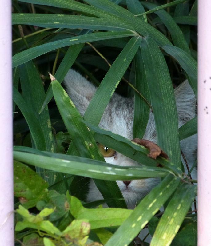 葉っぱの隙間から見えるネコ