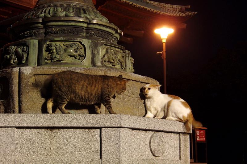 夏の夜に寺の灯籠でケンカする猫