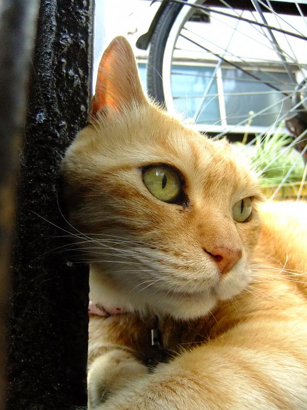 鉄柱に寄り掛かるネコ