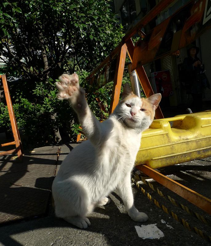 右手を差し出してるネコ